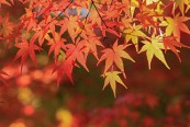 子どもと一緒に楽しめる浜松の紅葉6スポット