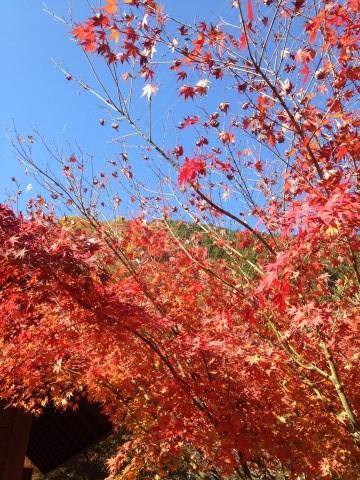 奥大井湖上駅周辺の紅葉