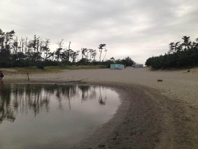 中田島砂丘に池が!