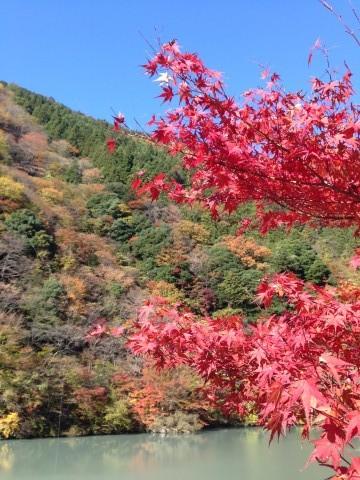 浜松から行ける紅葉:奥大井の紅葉