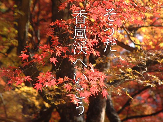 【日帰りぷち旅行】香嵐渓の紅葉をもっと楽しむ見所9ポイント