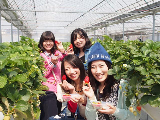 いちご農家が教える7つのイチゴ狩りの楽しみ方★