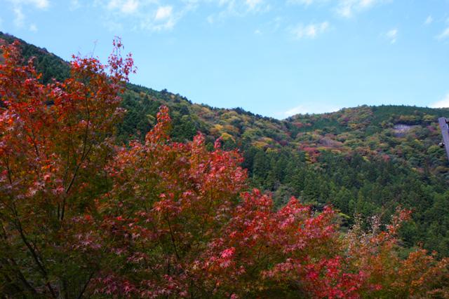 接岨峡温泉 紅葉