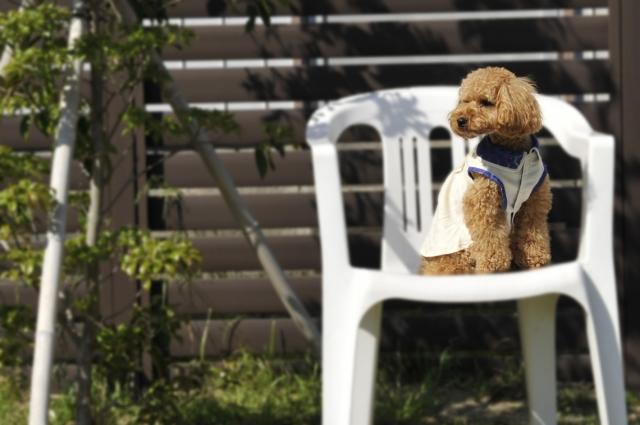 愛犬と旅行!ペットと宿泊するためのマナー&宿泊先5選