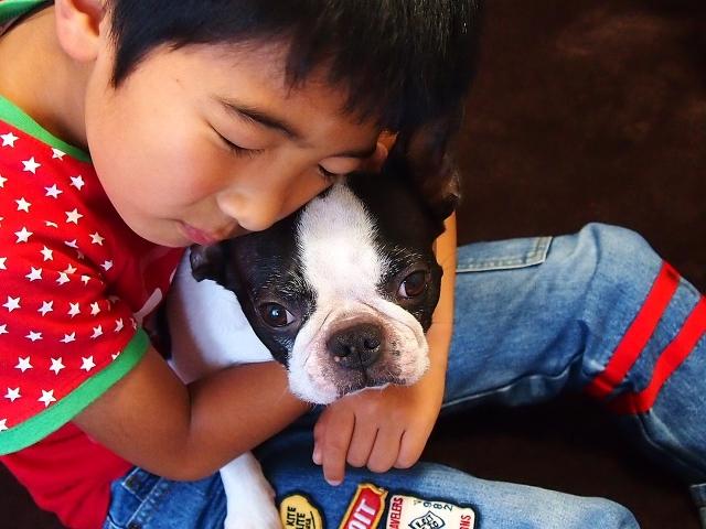 犬を褒める 浜松子犬しつけ教室