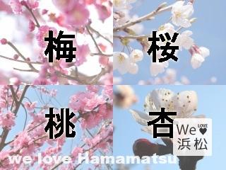 hananohikaku-e1453350054322-2