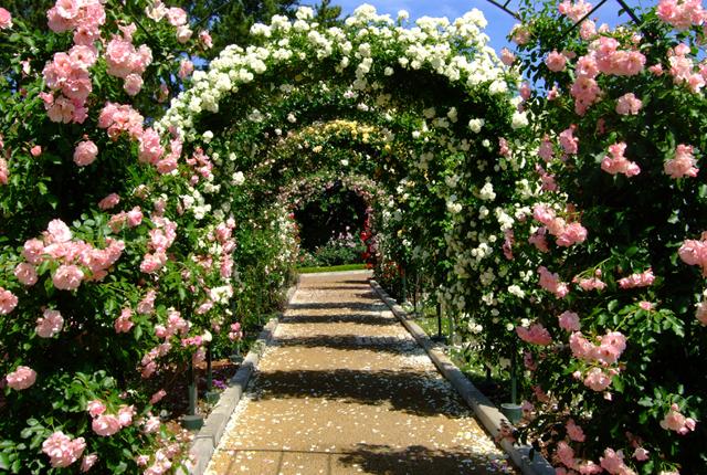 不意に見惚れる美しさ!浜松のローズガーデンと薔薇が伝える愛の言葉。