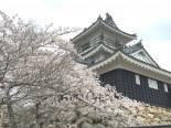 浜松城と桜2016