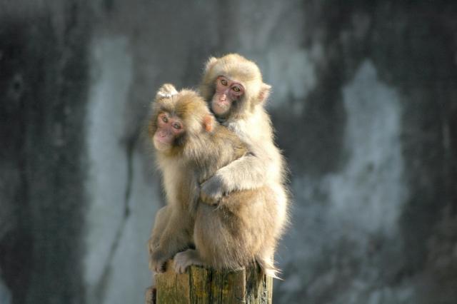 動物園 サル