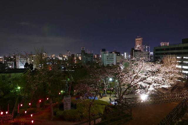浜松城公園の夜桜