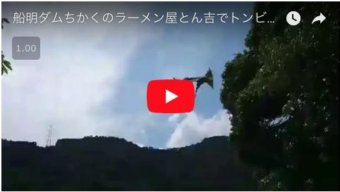 htube:welove浜松の動画集:トンビの餌やり