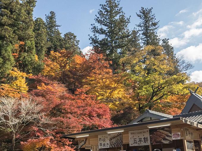 香嵐渓広場の紅葉