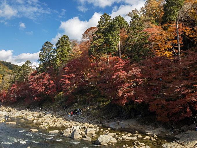 香嵐渓 待月橋からの紅葉