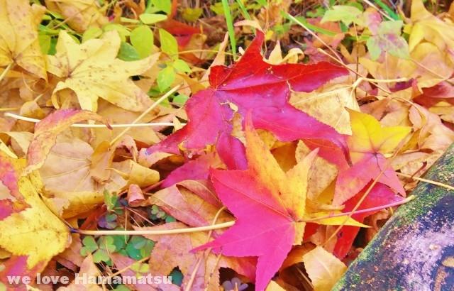 浜北森林公園紅葉