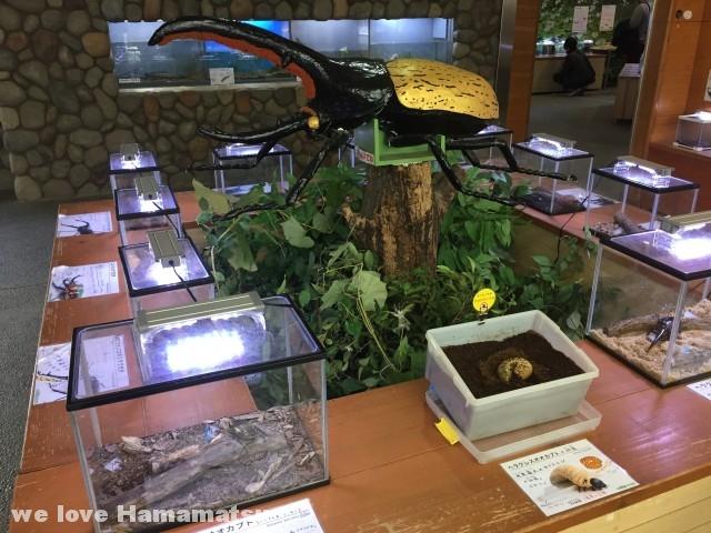 竜洋昆虫自然観察公園 昆虫館
