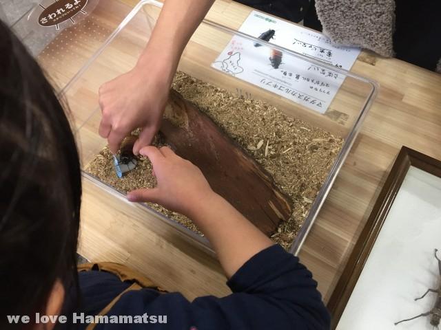 竜洋昆虫自然観察公園 昆虫館 ゴキブリ展