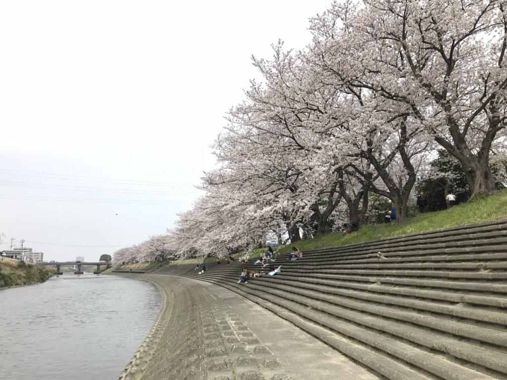 馬込川沿いの桜並木