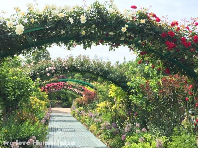 浜名湖ガーデンパーク バラアーチ