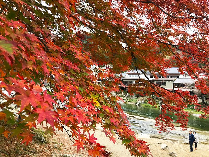 香嵐渓の紅葉の様子