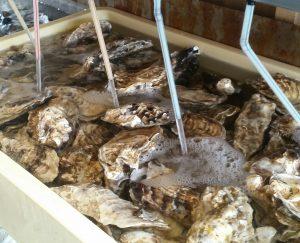浜焼き小屋ごっちんの牡蠣