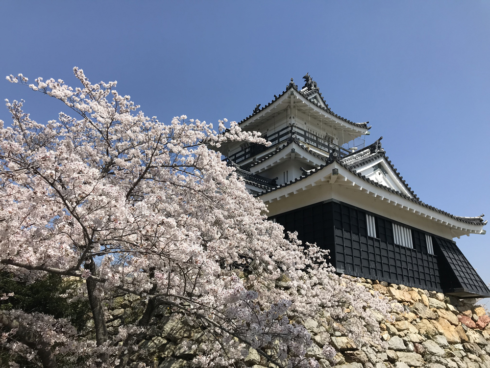 浜松城の桜