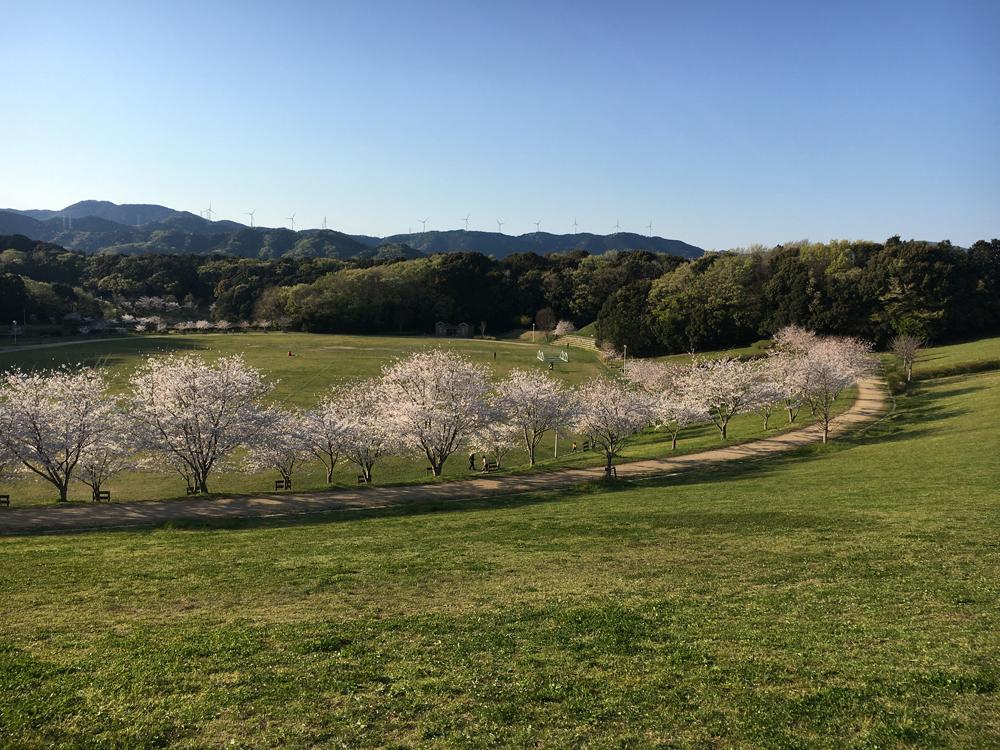 都田公園の桜