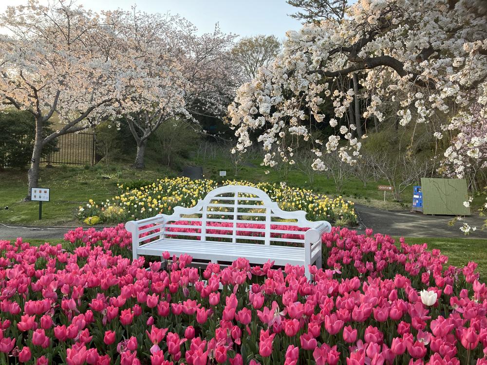 はままつフラワーパーク:桜撮影スポット