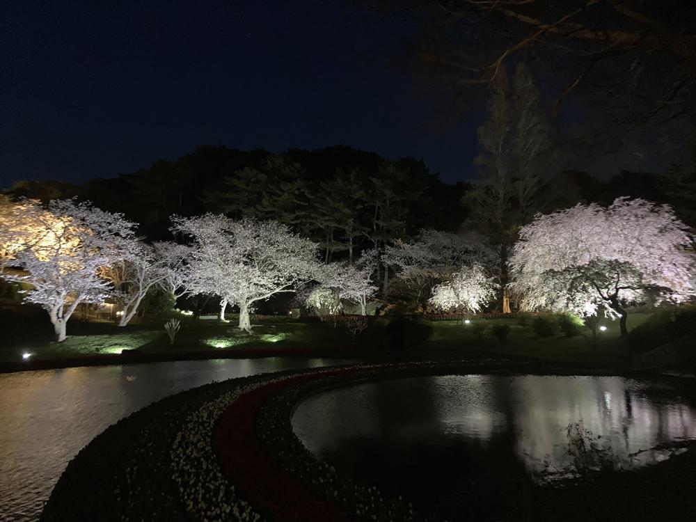 はままつフラワーパーク:夜桜ライトアップ