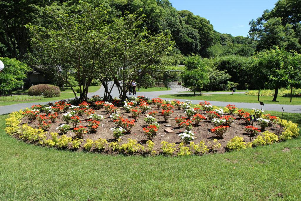浜松フラワーパークのお花たち